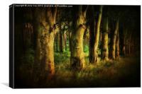 Creepy Woods 3, Canvas Print