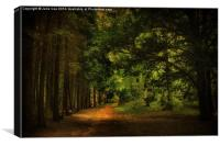 Blickling Woods 15, Canvas Print