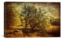 Autumn Holkham 4, Canvas Print