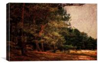 Holkham, Norfolk 5, Canvas Print
