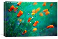 Orange poppy flowers, Canvas Print