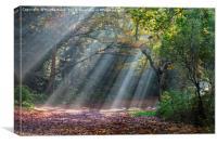 Sun rays in the park, Canvas Print