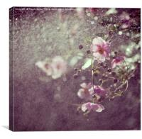 Pink anemone in the rain, Canvas Print