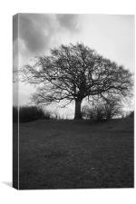 Tree in Black and White, Canvas Print