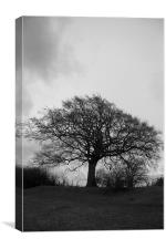Black and White Tree, Canvas Print