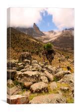 Approach to Mount Kenya, Canvas Print