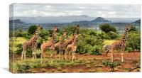The Giraffe Stare, Canvas Print