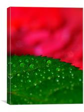 rose leaf, Canvas Print