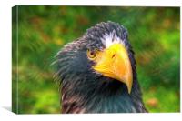Portrait of an Eagle, Canvas Print