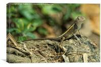 Gecko , Canvas Print