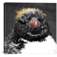 Baby Penguin, Canvas Print