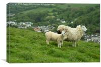 Coombe Martin Sheep , Canvas Print