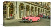 Pink Crestliner , Canvas Print
