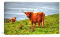Highland cows of Cornwall, Canvas Print