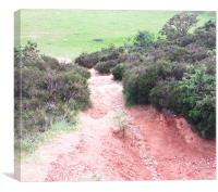Pathway Down, Canvas Print