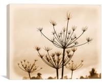 Winter Weeds, Canvas Print