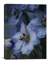Blue delphinium, Canvas Print
