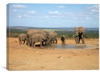 elephants around the water hole, Canvas Print