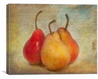 Pears, Canvas Print