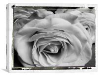 Rose Trio, Canvas Print