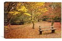 Bench in Autumn at Westonbirt