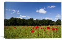 Field full of Poppies, Canvas Print