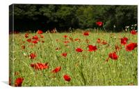 Field of Red, Canvas Print