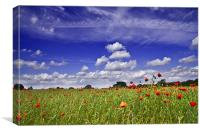 Fields of Red and Skies of Blue, Canvas Print