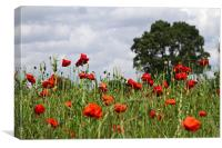Poppies and Oak Tree, Canvas Print