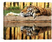 Tiger,tiger, Canvas Print