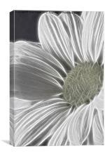 Daisy - Chrysanthemum - Fractalius, Canvas Print