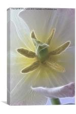 Tulip stigma & stamen - Fractalius, Canvas Print