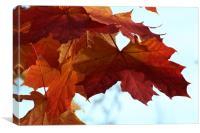Autumn Maple Leaves, Canvas Print