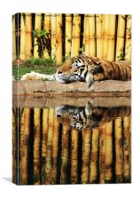 Tiger, Tiger, Canvas Print