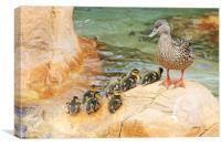 Little bit quackers, Canvas Print