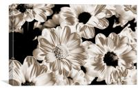 Polorised Daisies, Canvas Print