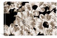 Polorised Daisies, Canvas Print