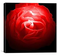 Red, Red Rose, Canvas Print