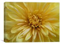 Layered Petals, Canvas Print