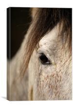 Horse portrait, Canvas Print
