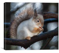 So cute..., Canvas Print
