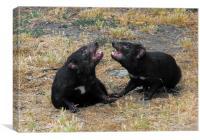 Tasmanian Devils, Canvas Print