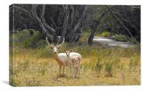 White deer pair, Canvas Print