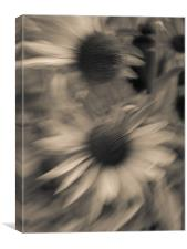 Daisies, Canvas Print