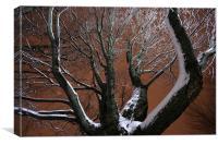 Tree and snow, Canvas Print