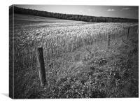 Field, Canvas Print