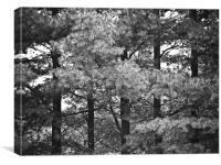 Trees, Canvas Print