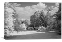 Batsford Arboretum., Canvas Print