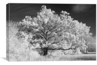 Magnificent Arborial Arms, Canvas Print