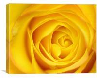 Yellow Rose Petals macro, Canvas Print